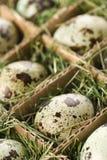 Speckled eggs. stock photos