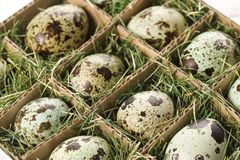 Speckled eggs. Stock Images
