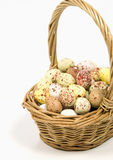 Speckled eggs in basket on white background Royalty Free Stock Photos