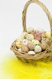 Speckled eggs in basket on white background Stock Photos