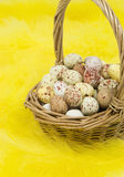 Speckled eggs in basket on yellow feathers Stock Image