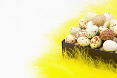 Speckled eggs in gift box Stock Photos