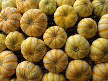 Speckled pumpkins fall decoration Royalty Free Stock Images