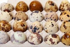 Speckled quail eggs in a carton box Stock Image