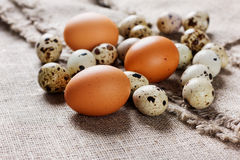 Speckled quail eggs and chicken eggs Stock Photos