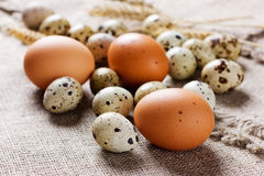 Speckled quail eggs and chicken eggs Royalty Free Stock Photo