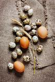 Speckled quail eggs and chicken eggs Royalty Free Stock Photography