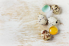 Speckled quail eggs Royalty Free Stock Images