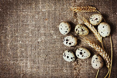 Speckled quail eggs Stock Image