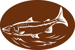 Speckled spotted trout fish retro woodcut Royalty Free Stock Photography