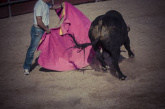 Spectacle of bullfighting, where a bull fighting a bullfighter S Stock Photography