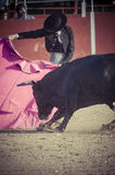 Spectacle of bullfighting, where a bull fighting a bullfighter S Royalty Free Stock Images