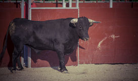 Spectacle of bullfighting, where a bull fighting a bullfighter S Stock Photo
