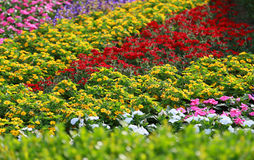 Spectacle of colorful flower garden Stock Image