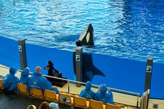 Spectacle in dolphinarium in Loro Park Tenerife.Canary Islands Stock Photos