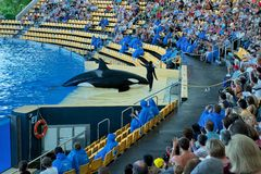 Spectacle in dolphinarium in Loro Park Tenerife.Canary Islands Royalty Free Stock Photography