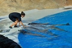 Spectacle in dolphinarium in Loro Park Tenerife.Canary Islands Royalty Free Stock Photos