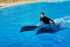 Spectacle in dolphinarium in Loro Park Tenerife.Canary Islands Stock Photo