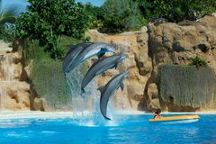 Spectacle in dolphinarium in Loro Park Tenerife.Canary Islands Stock Image