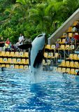Spectacle in dolphinarium in Loro Park Tenerife.Canary Islands Royalty Free Stock Photo