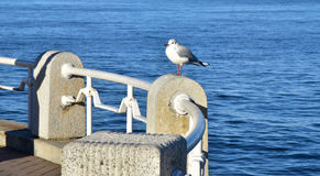 Spectacle of sea bird at the harbor. Spectacle of sea birds resting at the port of the harbor Stock Photo