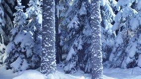Spectacualar sörjer den kalla vintern träd som täckas med snö som visas på vinternatten stock video