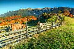 Spectaculair de herfst landelijk landschap dichtbij Zemelen, Transsylvanië, Roemenië, Europa Royalty-vrije Stock Foto