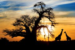 Spectaculaire Afrikaanse zonsondergang Stock Foto's