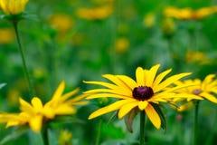 Spectaculaire en mooie bloemen in de Botanische Tuin van Gijà ³ n op 1 Augustus, 2018 royalty-vrije stock foto's