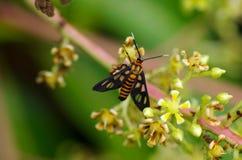spectacular бабочки Стоковое Фото