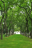 Spectacular alley with arched coiled trees. Spectacular park alley with green lawn and arched coiled trees Royalty Free Stock Photography