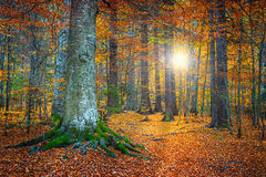 Spectacular autumn colorful forest landscape Stock Photography