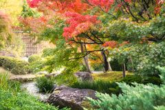 Spectacular autumn foliage along a small creek at the Chinese style garden in Koko-en Japanese Gardens in Himeji. Spectacular autumn foliage and green vegetation stock photos