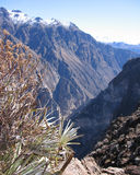 Spectacular Colca Canyon, Peru. A view of Colca Canyon (one of the world's deepest) from Cruz del Condor in Southern Peru Royalty Free Stock Images