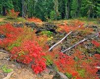 Spectacular di colore di caduta Immagine Stock