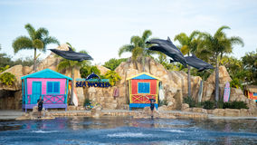 Spectacular dolphin show Stock Images