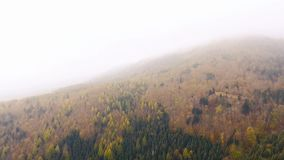 Spectacular drone footage of a overhead view of a autumn forest in the Swiss Alpine mountains. The drone looks directly down on the brightly colored leaves and stock video