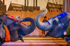 Spectacular elephant show Stock Images
