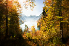 Spectacular Forest View with Lake Royalty Free Stock Photography