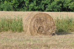 Hay rolls. Spectacular golden field with round hay rolls stock image