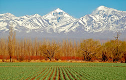 Spectacular Green fields white mountains  Stock Image