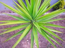 Spectacular green plant stock photos