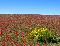 Spectacular hillside, Anacapa  Stock Photo
