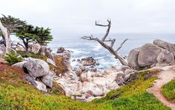 Monterey 17 Mile Drive in California royalty free stock photo