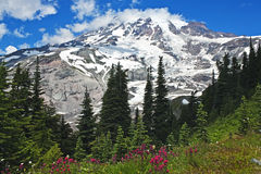 Spectacular Mt. Rainier with wildflowers. Panorama of Mt. Rainier with wildflowers, Mt. Rainier National Park, Washington royalty free stock image