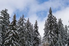 Spectacular panorama is opened on mountains, trees covered with white snow, lawn and blue sky with clouds. Spectacular panorama is opened on mountains, trees Stock Image