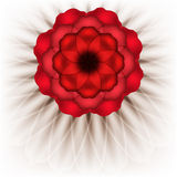 Spectacular red flower Stock Image