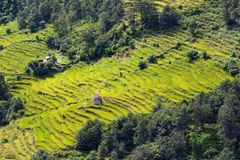 Spectacular rice fields on the Himalayan slopes, Nepal Stock Photos