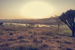 Spectacular savannah landscape of sun raising above marshes. royalty free stock photos