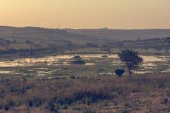 Spectacular savannah landscape of sun raising above marshes. royalty free stock image